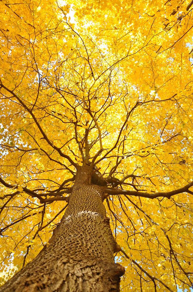 12 poze superbe cu copaci toamna - Poza 5