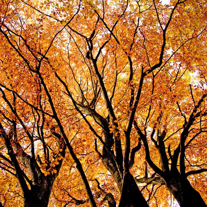 12 poze superbe cu copaci toamna - Poza 6