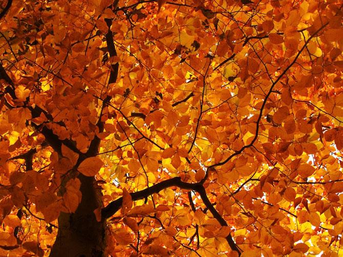 12 poze superbe cu copaci toamna - Poza 7