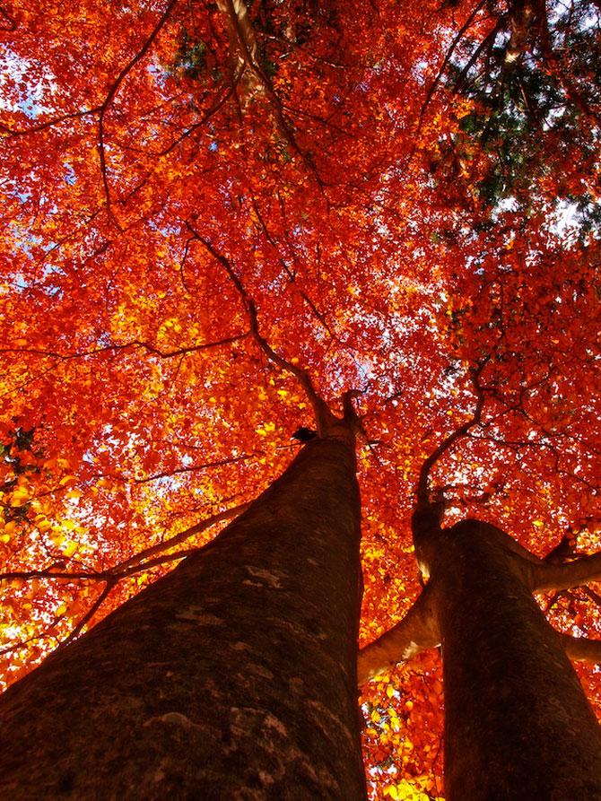 12 poze superbe cu copaci toamna - Poza 8