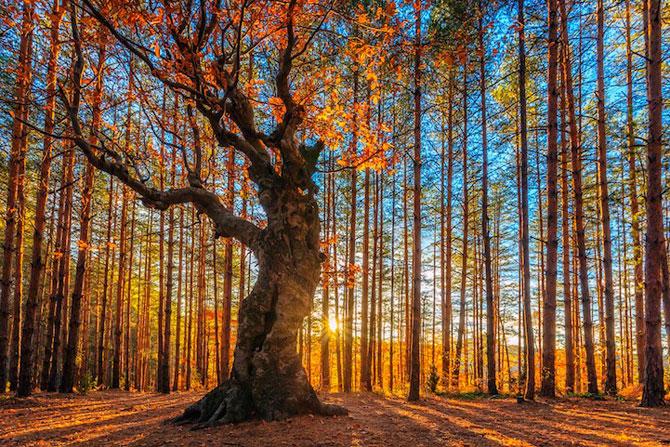 12 poze superbe cu copaci toamna - Poza 9