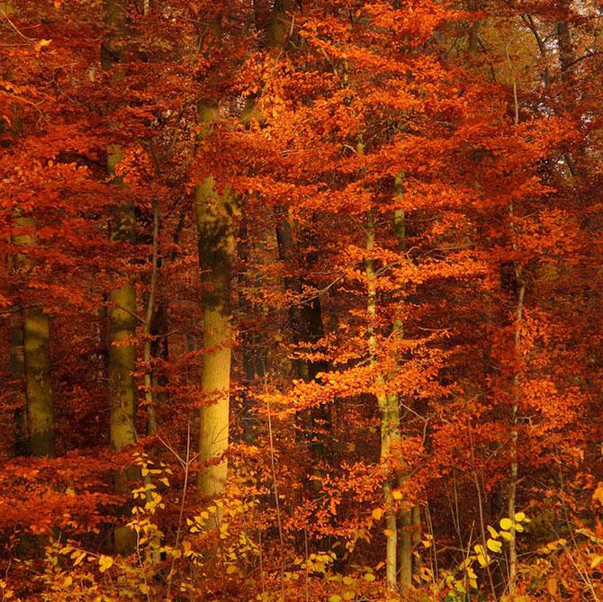 12 poze superbe cu copaci toamna - Poza 10
