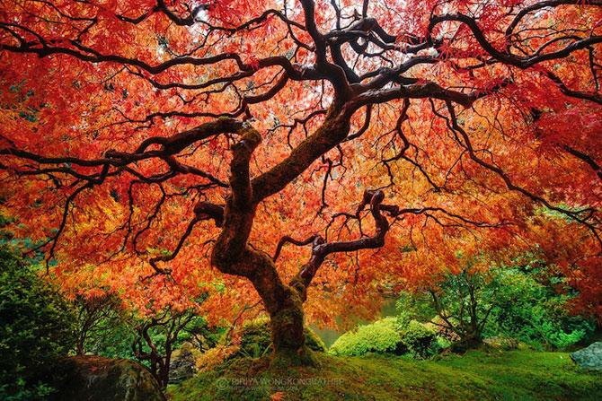 12 poze superbe cu copaci toamna - Poza 11