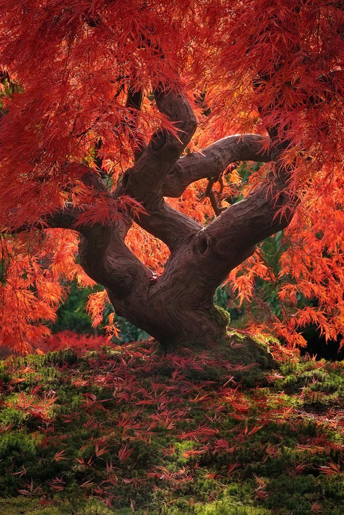 12 poze superbe cu copaci toamna - Poza 12