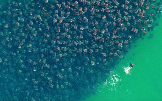 12 fotografii cu grupuri mari de animale - Poza 1