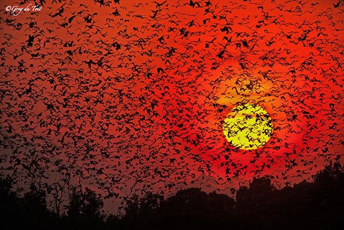 12 fotografii cu grupuri mari de animale - Poza 3
