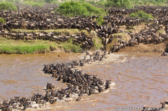 12 fotografii cu grupuri mari de animale - Poza 4