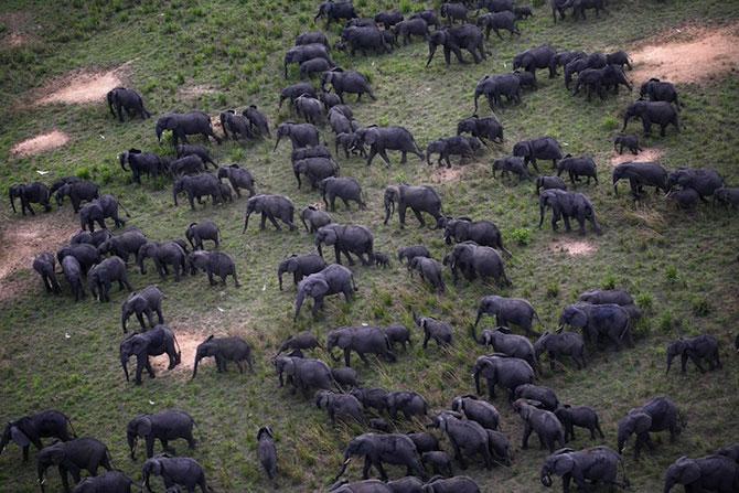 12 fotografii cu grupuri mari de animale - Poza 5