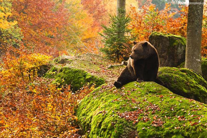 Padurea din Bavaria in 12 fotografii superbe - Poza 1