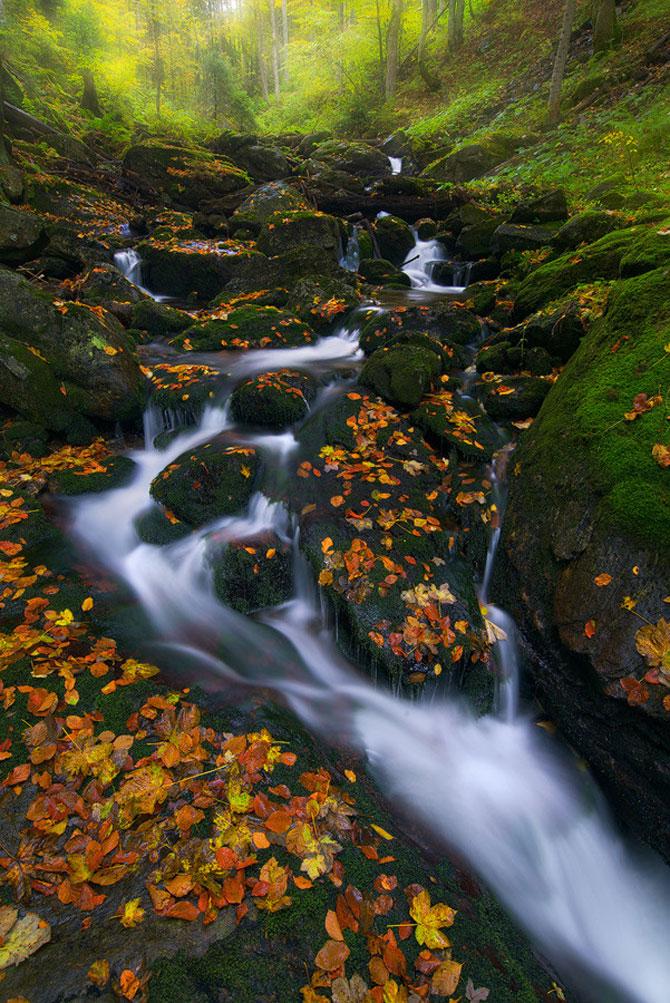 Padurea din Bavaria in 12 fotografii superbe - Poza 2