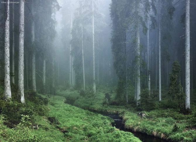 Padurea din Bavaria in 12 fotografii superbe - Poza 3
