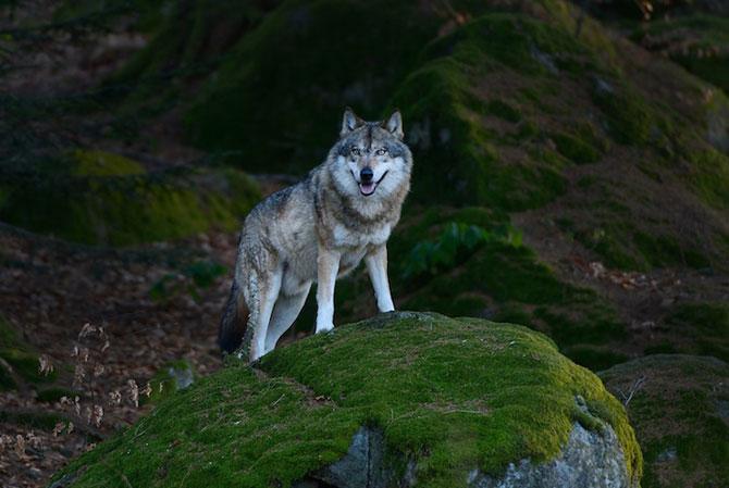Padurea din Bavaria in 12 fotografii superbe - Poza 5