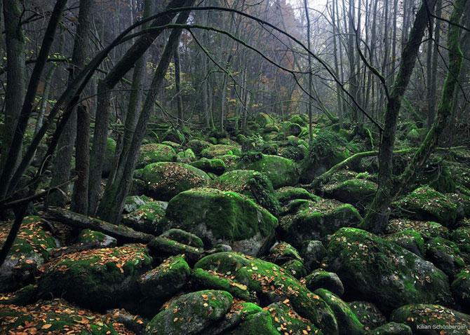 Padurea din Bavaria in 12 fotografii superbe - Poza 6
