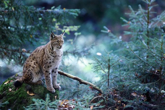 Padurea din Bavaria in 12 fotografii superbe - Poza 7