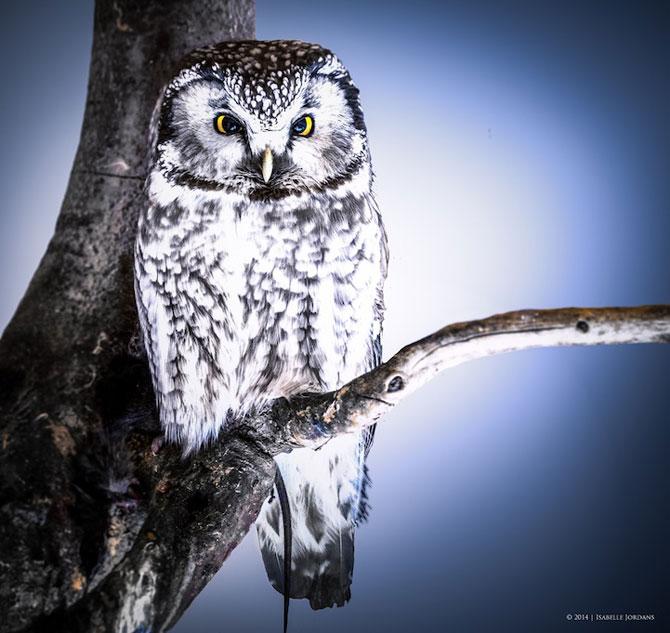 Padurea din Bavaria in 12 fotografii superbe - Poza 11