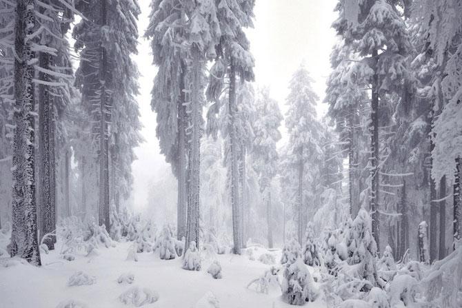 Padurea din Bavaria in 12 fotografii superbe - Poza 12