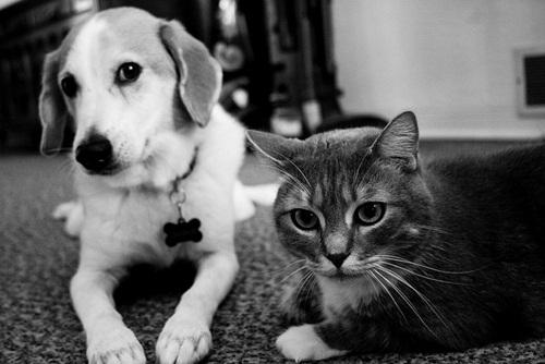 Caini si pisici in 22 de fotografii - Poza 9