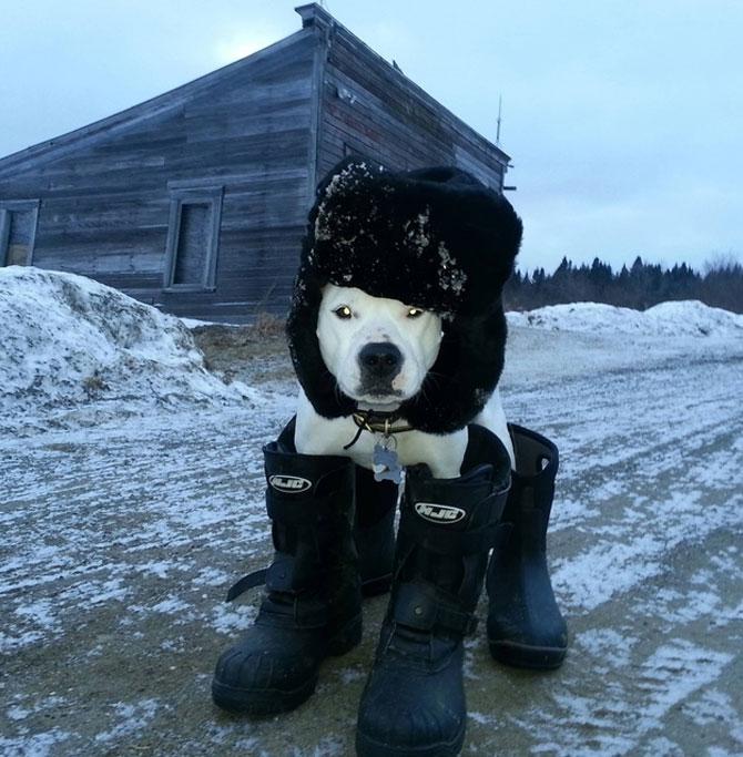 9 caini care abia asteapta prima ninsoare - Poza 1