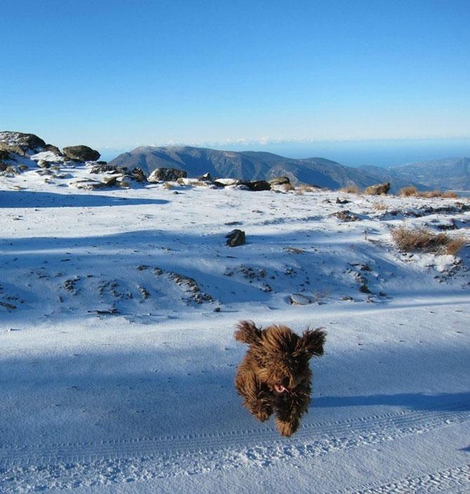 9 caini care abia asteapta prima ninsoare - Poza 3