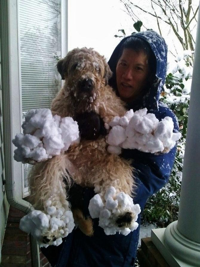 9 caini care abia asteapta prima ninsoare - Poza 4