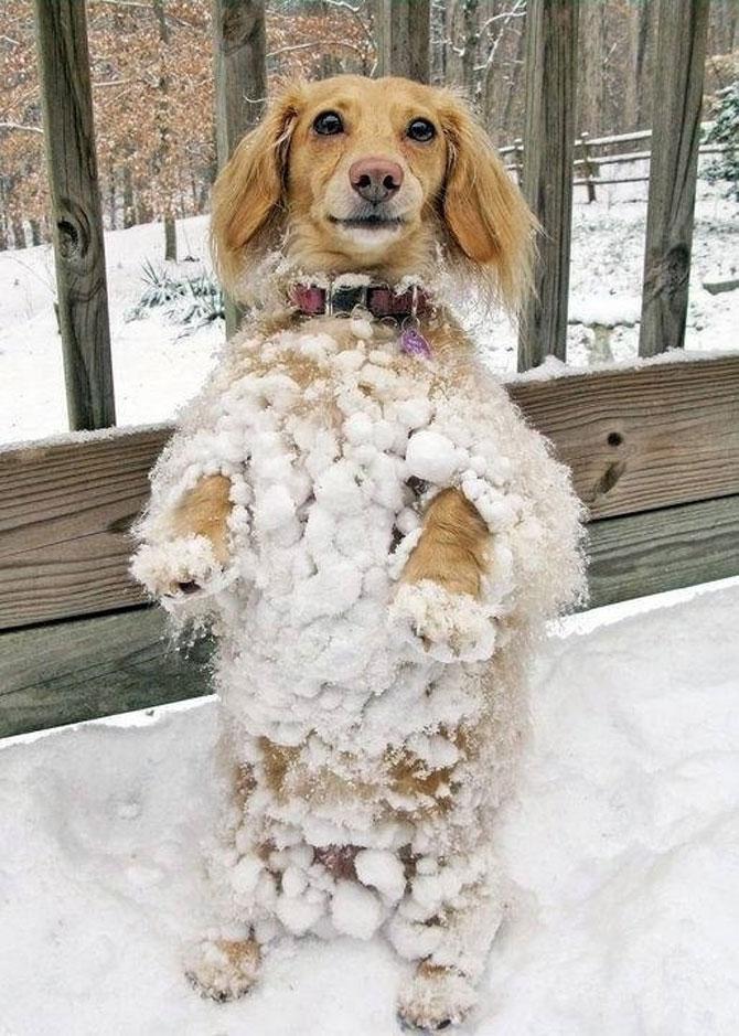 9 caini care abia asteapta prima ninsoare - Poza 7