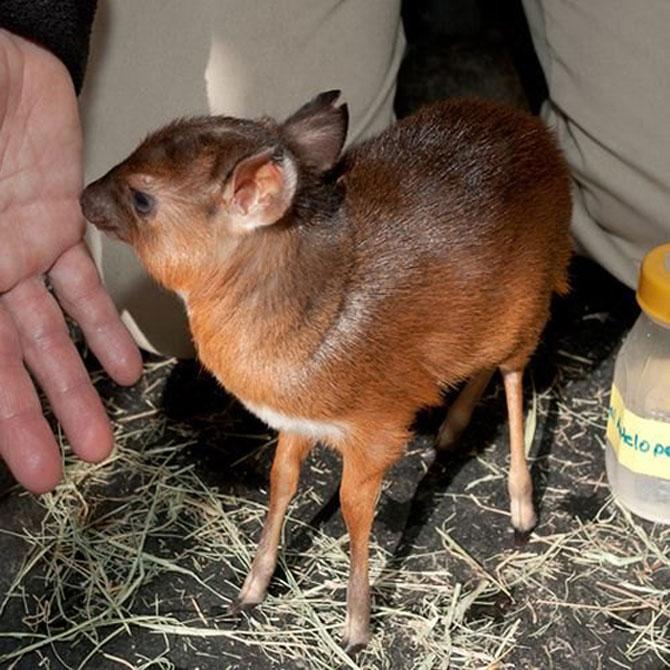 Cele mai simpatice animale mici din lume - Poza 1