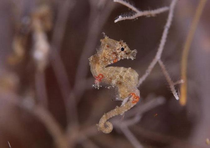 Cele mai simpatice animale mici din lume - Poza 3