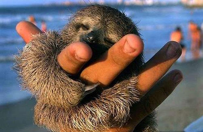 Cele mai simpatice animale mici din lume - Poza 6