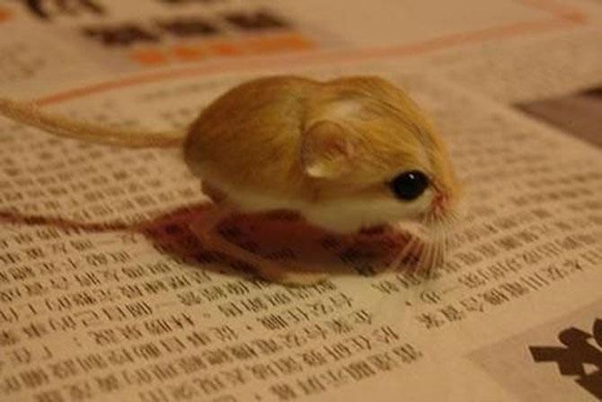 Cele mai simpatice animale mici din lume - Poza 7