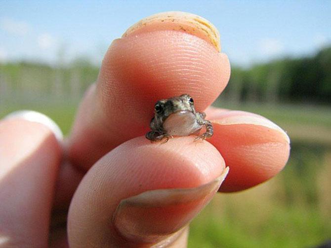 Cele mai simpatice animale mici din lume - Poza 9