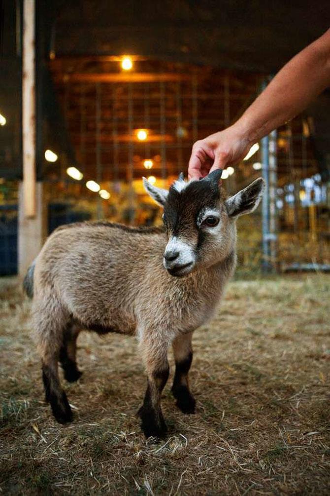 Cele mai simpatice animale mici din lume - Poza 10