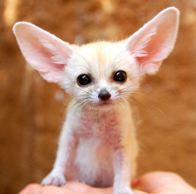 Cele mai simpatice animale mici din lume - Poza 11