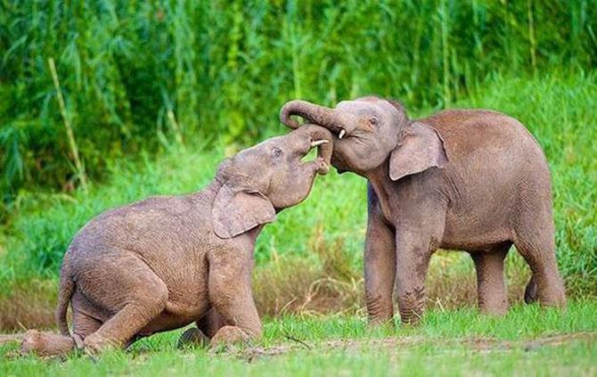 Cele mai simpatice animale mici din lume - Poza 12