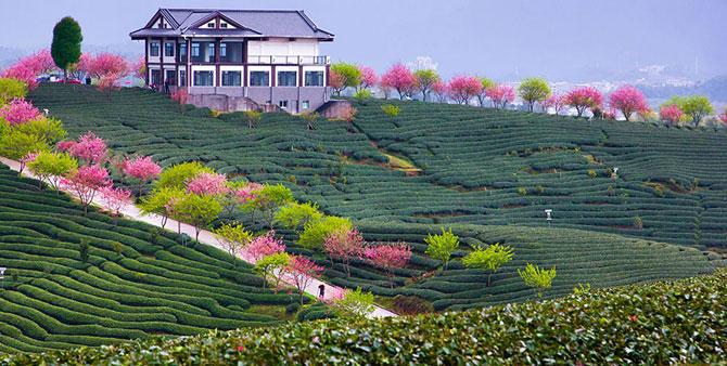 Festivalul florilor de cires Sakura in 13 imagini minunate - Poza 11