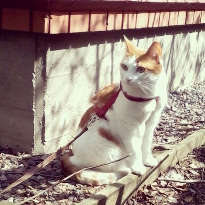 12 pisici prea rasfatate - Poza 1