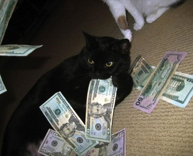12 pisici prea rasfatate - Poza 5