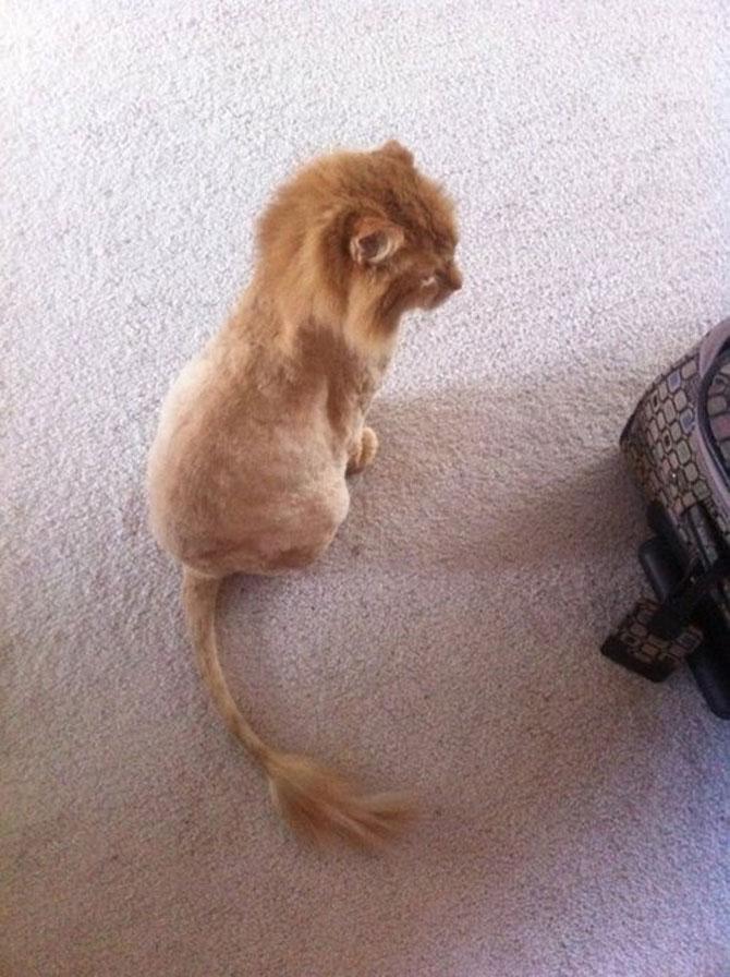 12 pisici prea rasfatate - Poza 7
