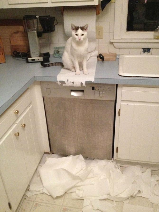 12 pisici prea rasfatate - Poza 8