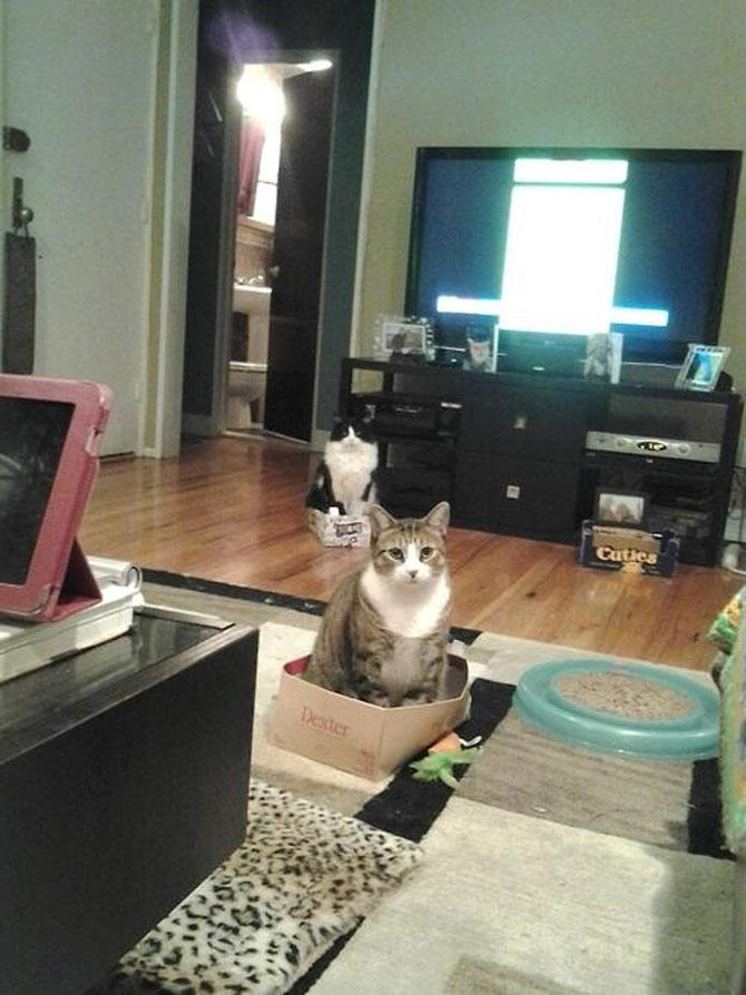 12 pisici prea rasfatate - Poza 9