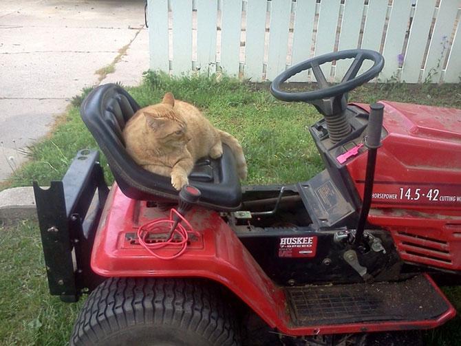 12 pisici prea rasfatate - Poza 11