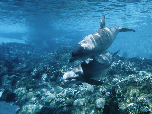 40 vederi splendide ale vietii marine - Poza 13