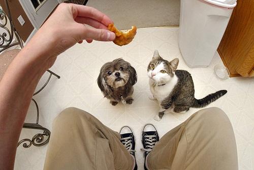 Caini si pisici in 22 de fotografii - Poza 11