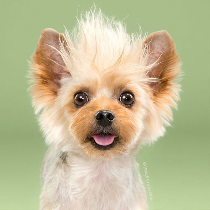 Unul mai cochet ca altul: Tunsori canine cu influente asiatice - Poza 14