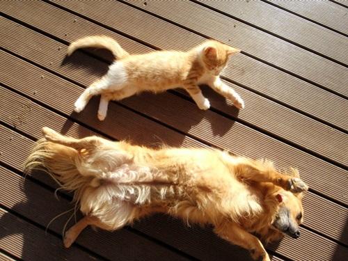 Caini si pisici in 22 de fotografii - Poza 12
