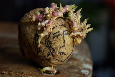 Sculptura in... cartofi! - Poza 15