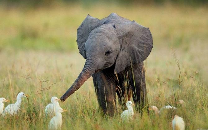 15 pui de animale bucurosi de primavara - Poza 1