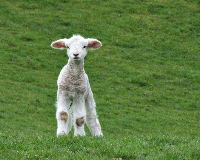 15 pui de animale bucurosi de primavara - Poza 3