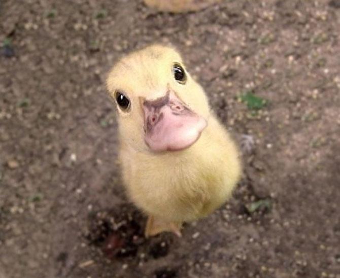 15 pui de animale bucurosi de primavara - Poza 5