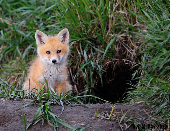 15 pui de animale bucurosi de primavara - Poza 10