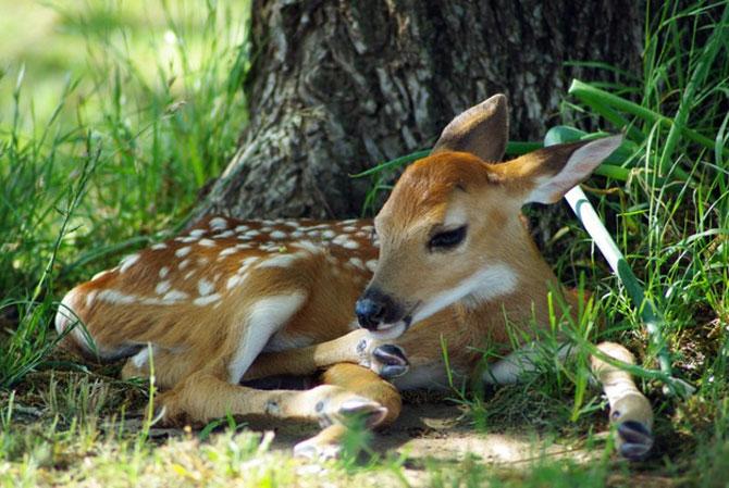 15 pui de animale bucurosi de primavara - Poza 13
